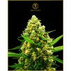 Семена Конопли Anaconda Seeds Auto Hypnotic Feminised