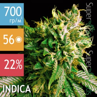 Семена Конопли Anaconda Seeds Strong Skunk
