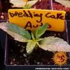 Auto Wedding Cake Feminised