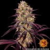 Ayahuasca Purple Feminised