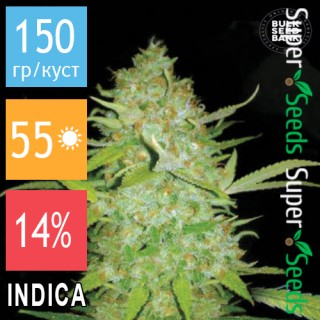 Семена Конопли Bulk Seed Bank Auto AK Feminised