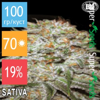 Семена Конопли Bulk Seed Bank Auto East Ryder Feminised