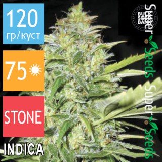 Семена Конопли Bulk Seed Bank Auto Lime Skunk Feminised