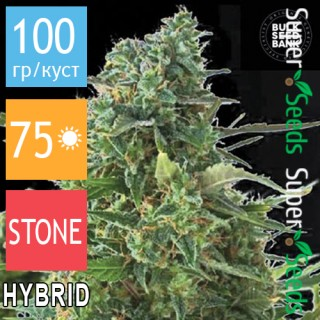 Семена Конопли Bulk Seed Bank Auto NBA Diesel Feminised