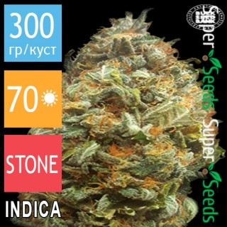 Семена Конопли Bulk Seed Bank Auto Original Orange Bud Feminised