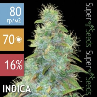Семена Конопли Bulk Seed Bank Auto Sweet Tooth Feminised