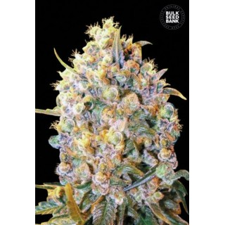 Семена Конопли Bulk Seed Bank Bigger Bud Feminised