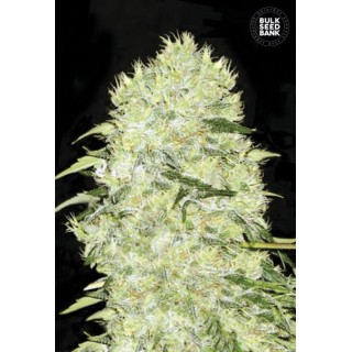 Семена Конопли Bulk Seed Bank Bubblegum Extra Feminised