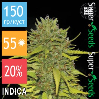 Семена Конопли Bulk Seed Bank AK - 47 Feminised
