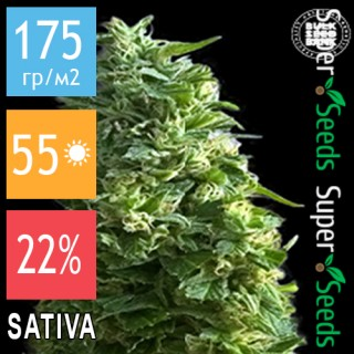 Семена Конопли Bulk Seed Bank Lime Skunk Feminised