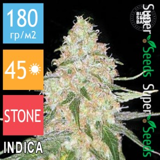 Семена Конопли Bulk Seed Bank Special Skunk Feminised