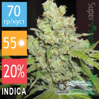 Семена Конопли CZ Seeds Auto Big Bud Feminised