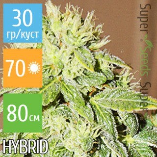 Семена Конопли Carpathians Seeds Auto Black Chere Feminised