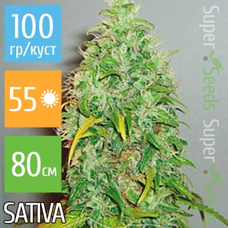 Семена Конопли Carpathians Seeds Auto Carpathian Skunk Feminised