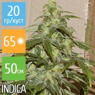 Семена Конопли Carpathians Seeds Auto White Chere Feminised