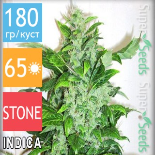 Семена Конопли Errors Seeds Auto Big Bud Feminised