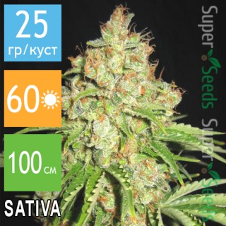 Семена Конопли Errors Seeds Auto White Russian Feminised