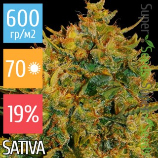 Семена Конопли Ganja Seeds Сolombian Gold Feminised