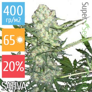 Семена Конопли Ganja Seeds Afghan Feminised