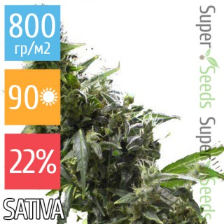 Семена Конопли Ganja Seeds Amnesia Haze Feminised