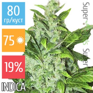 Семена Конопли Ganja Seeds Auto Big Bud Feminised