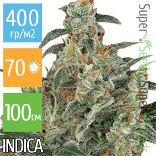 Семена Конопли Ganja Seeds Auto Cheese Feminised