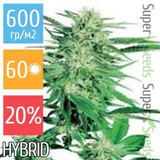 Семена Конопли Ganja Seeds Big Bud Feminised