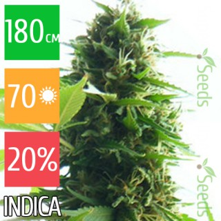 Семена Конопли Ganja Seeds Jack Herer Feminised