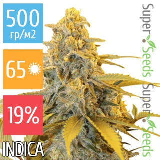 Семена Конопли Ganja Seeds Mazar Feminised