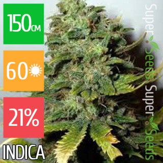 Семена Конопли Ganja Seeds Narkush Feminised
