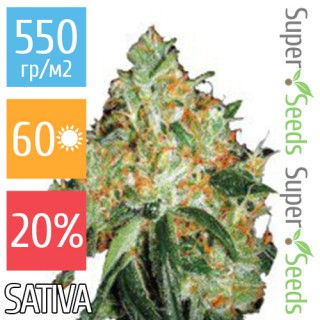 Семена Конопли Ganja Seeds Orange Bud Feminised