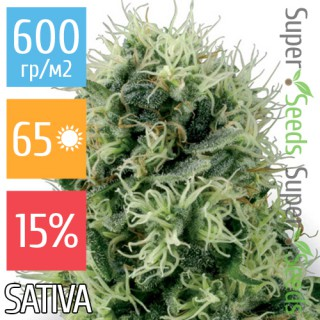 Семена Конопли Ganja Seeds Power Plant Feminised