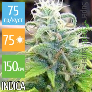 Семена Конопли Ganja Seeds Spaceman Skunk Feminised