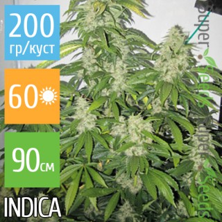 Семена Конопли Ganja Seeds White Dwarf Feminised