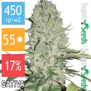 Семена Конопли Ganja Seeds White Widow Feminised