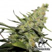 Семена Конопли Green Silk Road Seeds AK - 47 Feminised