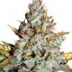 Семена Конопли Green Silk Road Seeds Auto Blueberry Feminised
