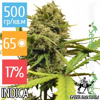 Семена Конопли Green Silk Road Seeds Auto Northern Lights Feminised