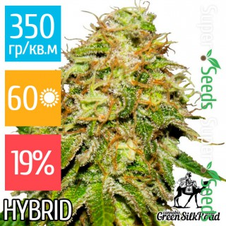 Семена Конопли Green Silk Road Seeds Auto Critical Feminised
