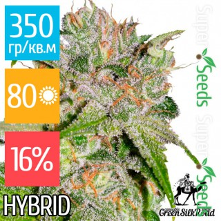 Семена Конопли Green Silk Road Seeds Auto Sweet Tooth Feminised