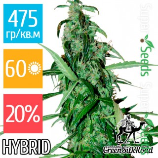 Семена Конопли Green Silk Road Seeds Chronic Feminised