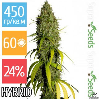 Семена Конопли Green Silk Road Seeds Northern Lights Feminised