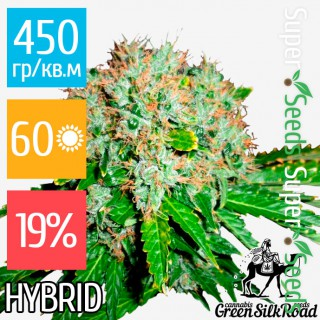 Семена Конопли Green Silk Road Seeds White Widow Feminised