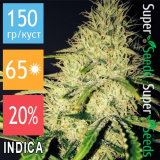 Семена Конопли Green Silk Road Seeds Auto Cheese Feminised
