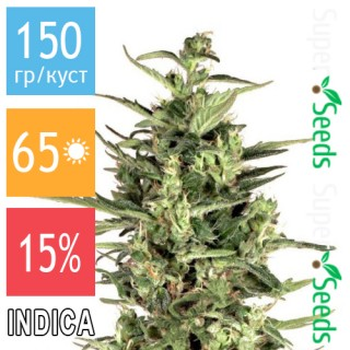 Семена Конопли Green Silk Road Seeds Cheese Feminised