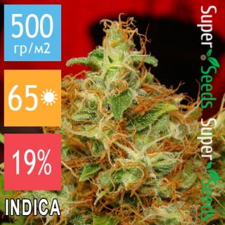 Семена Конопли Green Silk Road Seeds Mazar Feminised