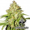 Семена Конопли Green Silk Road Seeds White Russian Feminised