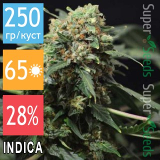 Семена Конопли Jah Seeds Auto Big Devil Feminised