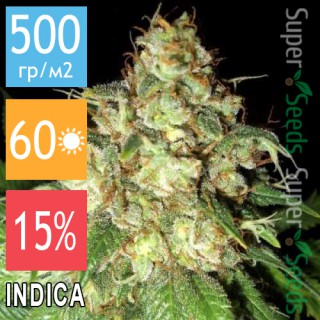 Семена Конопли Jah Seeds Auto Cheese Feminised