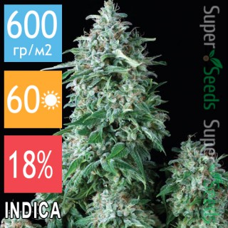 Семена Конопли Jah Seeds Auto Northern Light Feminised